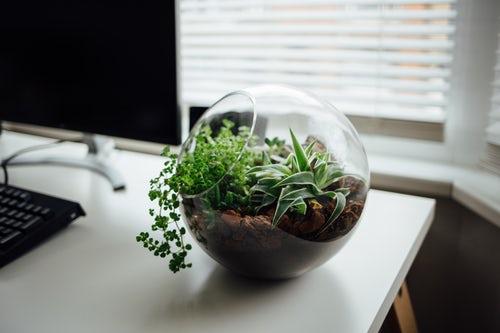 Terrarium • Biotope Zen